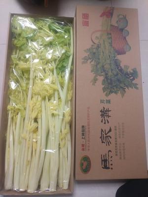 这是一张关于马家沟芹菜 55~60cm 0.5斤以下 大棚种植 的产品图片