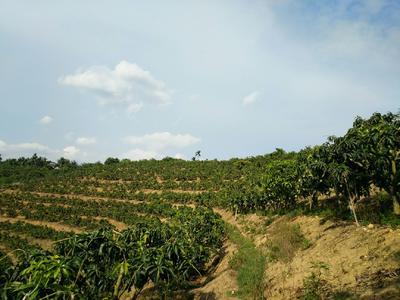 这是一张关于果园 转让 10~20年 50亩以下 的产品图片
