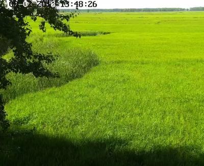 这是一张关于富硒大米 一等品 一季稻 粳米 的产品图片