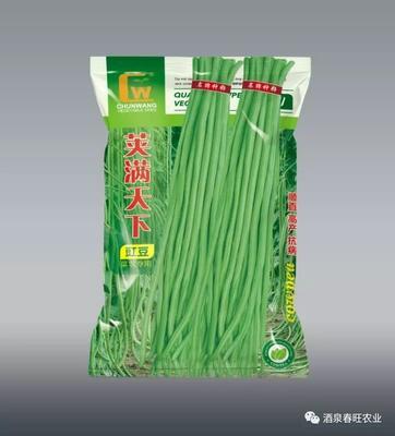 甘肃省酒泉市肃州区油青豆角种子 ≥90%