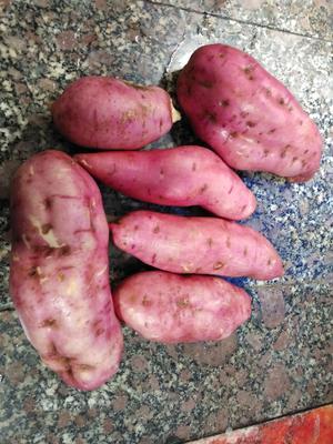 贵州省黔西南布依族苗族自治州兴仁县龙薯九号 混装通货 红皮