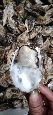 这是一张关于台山生蚝 人工殖养 2-3两/只 的产品图片