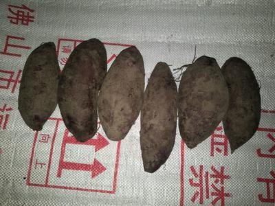 这是一张关于济黑2号紫薯 2两 的产品图片