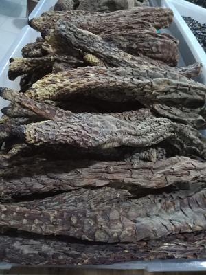 甘肃省酒泉市瓜州县(原安西县)肉苁蓉