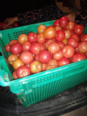 这是一张关于粉果番茄 通货 弧一以下 硬粉 的产品图片