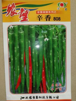 这是一张关于辛香808线椒种子 杂交种 ≥85% 的产品图片