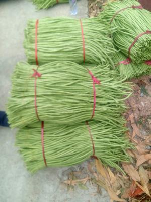 海南省海南省陵水黎族自治县绿翡翠长豆角 70cm以上