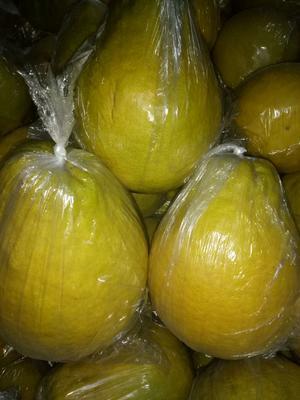 这是一张关于江永香柚 2斤以上 的产品图片