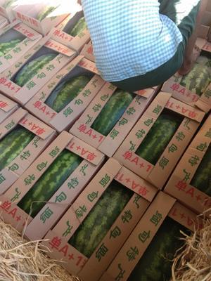 云南省德宏傣族景颇族自治州瑞丽市缅甸西瓜 15斤打底 10成熟 1茬 有籽