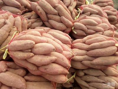 这是一张关于龙薯九号 混装通货 黄皮 的产品图片