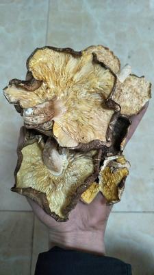 湖北省宜昌市远安县大杯香菇干  1年以上 散装 袋料剪脚大片香菇