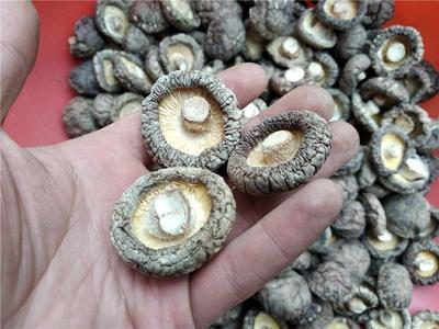 湖北省随州市随县剪柄香菇  新菇冬菇手选面头香菇