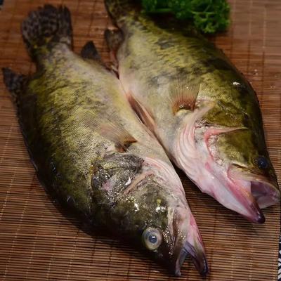 这是一张关于翘嘴鳜 野生 0.8斤-1.4斤 的产品图片