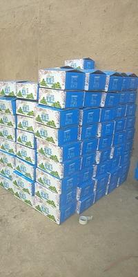 新疆维吾尔自治区吐鲁番市托克逊县新疆绿葡萄干 优等