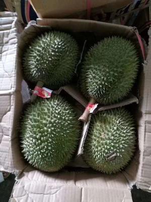 广西壮族自治区崇左市凭祥市猫山王榴莲 2公斤以下 80 - 90%以上