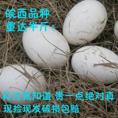 山东省滨州市滨城区鲜鹅蛋  食用 箱装 12枚包邮可做种蛋