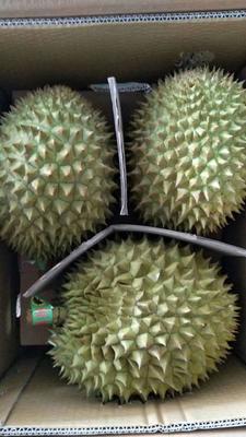 广西壮族自治区崇左市凭祥市干荛榴莲 2 - 3公斤 80 - 90%以上