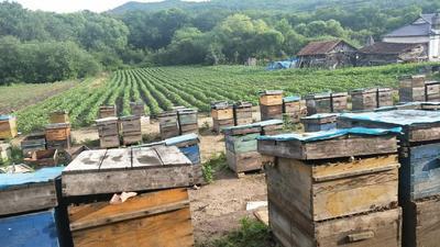 吉林省延边朝鲜族自治州安图县东北黑蜂蜜