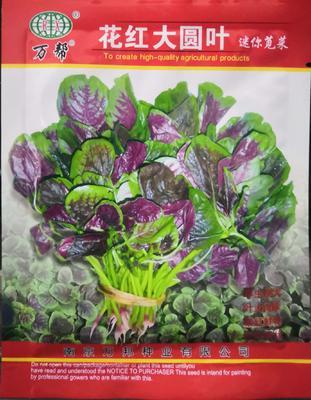 河南省南阳市卧龙区红苋菜种子