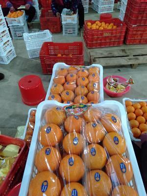 广西壮族自治区桂林市兴安县蜜香橙 70-75mm 4-8两