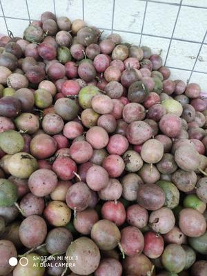 广东省茂名市化州市紫香一号百香果 40 - 50克 8到12个一斤