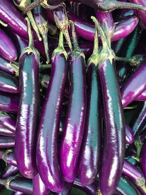 广西壮族自治区桂林市荔浦县紫长茄 混装通货 长茄