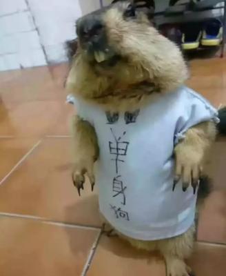 这是一张关于中华鼢鼠 的产品图片