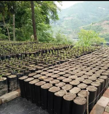 安徽省安庆市桐城市育苗袋 柑橘类专用育苗容器