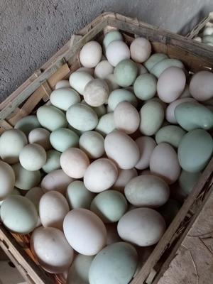 江西省吉安市青原区麻鸭蛋 食用 散装