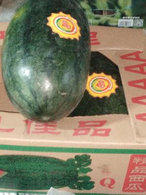 山东省潍坊市奎文区黑美人西瓜 3斤打底 8成熟 1茬 有籽
