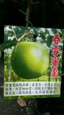 这是一张关于青枣苗 的产品图片