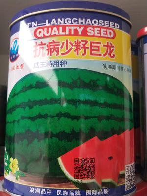 抗病少籽巨龙西瓜种子 亲本(原种) ≥90% 少籽巨龙,巨龙九号