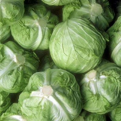 陕西省西安市未央区莲花白包菜 2.0~2.5斤