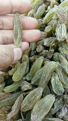 山东省枣庄市山亭区新疆绿葡萄干 优等