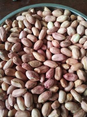 山东省青岛市平度市鲁花系列 花生米 干货