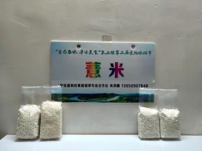 福建省三明市宁化县宁化薏米