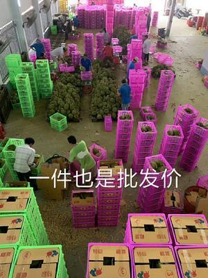 广西壮族自治区崇左市凭祥市越南金枕榴莲  2 - 3公斤 90%以上