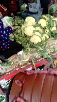 山东省菏泽市牡丹区有机花菜 松散 3~4斤