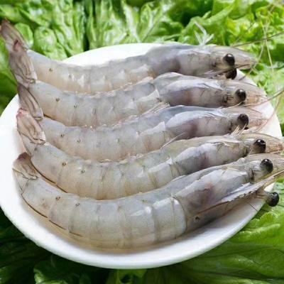 江苏省连云港市赣榆区中国对虾 野生 2-4钱