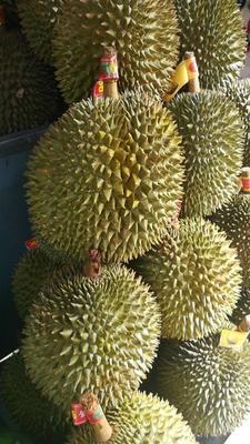 广西壮族自治区防城港市港口区金枕头榴莲 3 - 4公斤 80 - 90%以上