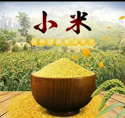 河北省邯郸市曲周县大金苗