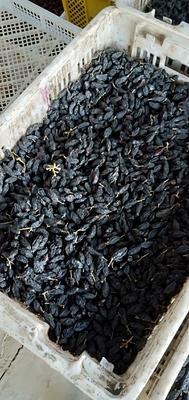 新疆维吾尔自治区塔城地区沙湾县黑加仑葡萄干 统货