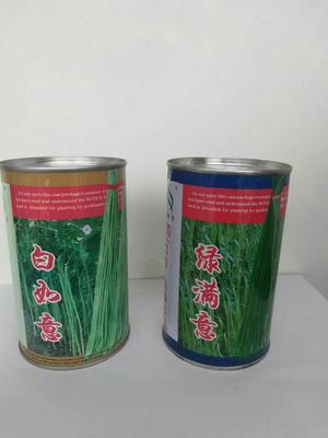 山东省济南市历城区白皮豆角种子 ≥95%