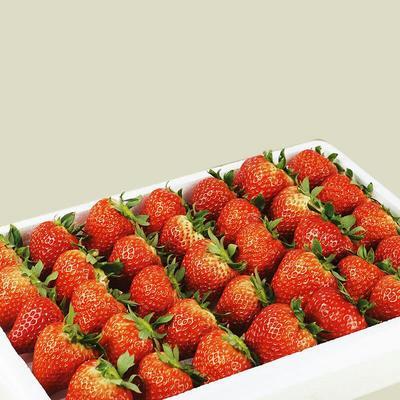 江苏省徐州市新沂市红颜草莓 20克以上