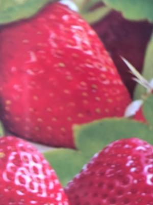 江苏省徐州市新沂市甜查理草莓 30克以上