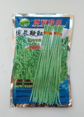 河南省开封市通许县白皮豆角种子 ≥98%