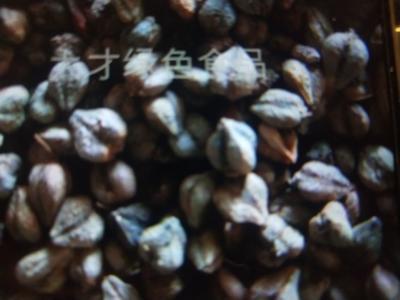 甘肃省白银市平川区普通荞麦
