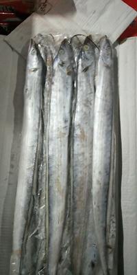 这是一张关于舟山带鱼 野生 0.5公斤以下 的产品图片