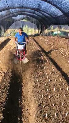 山东省潍坊市安丘市培土机  全新小型开沟培土机