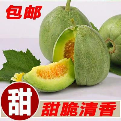 山东省临沂市蒙阴县绿宝甜瓜 0.5斤以上